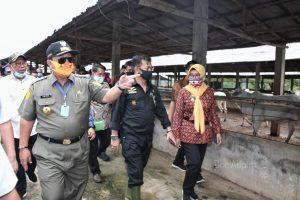 Mentan Syahrul Yasin Limpo Dukung Penuh Gubernur Arinal Wujudkan Lampung sebagai Lumbung Ternak Nasional