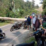 Jaringan Listrik rusak akibat tertimpa pohon Besar