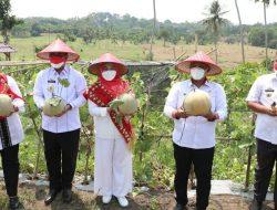 Selama Pademi Kebun Edukasi udah 3 Kali Panen Melon